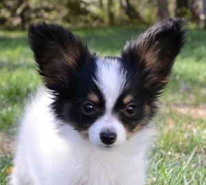 A Puppy 5-20-15
